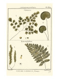 Fern Classification IV Affiches par Denis Diderot