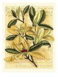 French Magnolia Posters av Samuel Curtis