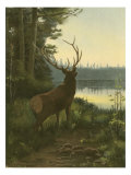 Elk Prints by Oliver Kemp