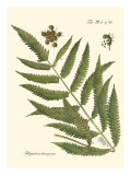 Small Antique Fern II Posters