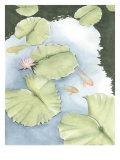 Koi Reflection II Prints by Chariklia Zarris