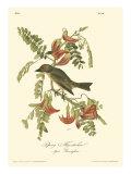 Gobe-mouches Affiches par John James Audubon