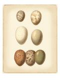 Bird Egg Study II Kunst von  Vision Studio