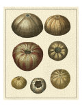 Crackled Antique Shells III Kunstdrucke von Denis Diderot