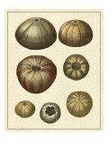 Crackled Antique Shells III Láminas por Denis Diderot