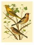 Domestic Bird Family VI Prints by W. Rutledge