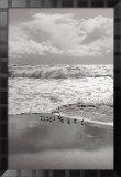 Shorebirds, Point Reyes Prints by Marty Knapp