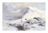 Winter Ptarmigan in a Mountain Landscape Reproduction giclée Premium par Archibald Thorburn