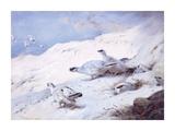 Woodcock in a Snowy Highland Giclée-Premiumdruck von Archibald Thorburn