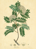 East Indian Plants VI Premium Giclee Print by Nathaniel Wallich