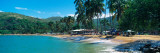 Trees on the Beach, Arapito Beach, Mochima National Park, Anzoategui State-Sucre State, Venezuela Fotografisk trykk av Panoramic Images,