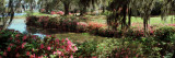Azaleas and Willow Trees in a Park, Charleston, Charleston County, South Carolina, USA Photographic Print
