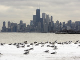 Birds Sit in Deep Snowdrifts at the Lake Shore Drive in Chicago Reproduction photographique