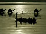 Indian Farmers Carry Watermelon across the River Ganges on their Camels in Allahabad, India Impressão fotográfica