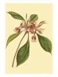 Tropical Ambrosia III Prints by Sydenham Teast Edwards