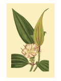 Tropical Ambrosia I Posters by Sydenham Teast Edwards