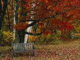 Empty Bench under Maple Tree, Twin Ponds Farm, West River Valley, Vermont, USA Fotografie-Druck von Scott T. Smith