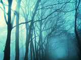 Atmospheric Image of Trees in Mist Poster by  M.O.