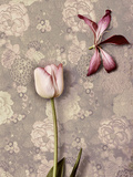 Pink Tulip and Lily Prints by  K.T.
