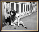 Sitting Dog Poster