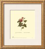 薔薇 ポスター : ピエール=ジョゼフ・ルドゥルテ