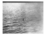 An Infamous Image of the Loch Ness Monster Lámina giclée prémium