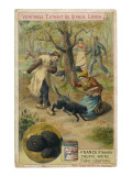 Dogs of Perigord (France) Sniffing for Truffles Giclée-vedos