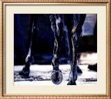 War Emblem's Legs Posters by David R. Stoecklein