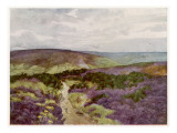 Yorkshire : a Hilltop Track Through the Heather on Sleights Moor Giclée-tryk