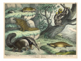 Various Quadrupeds: Giant Anteater, Brown Platypus, Pangolin, Armadillo, and Three-Toed Sloth Giclée-Druck