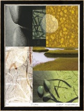 Egg And Nest-Acadia Series Limited Edition Framed Print by Peter Kitchell