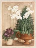 Grande Orchidée I Affiche par Vincent Jeannerot