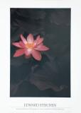 Lotus Poster von Edward J. Steichen