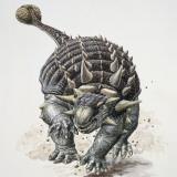 Close-Up of an Ankylosaurus Dinosaur (Ankylosaurus Magniventris) Fotografisk tryk