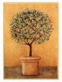 Oranger I Affiches par Laurence David