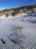 Beach Landscape with Animal Tracks and Grassy Sand Dunes, Gulf Islands National Seashore, Florida Lámina fotográfica por Jeff Foott