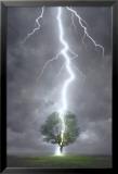 Rayo golpeando un árbol Láminas