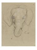 Tête d'éléphant Giclée-tryk af Charles Le Brun