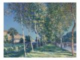 Allée de peupliers aux environs de Moret-sur-Loing Reproduction procédé giclée par Alfred Sisley