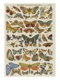 Histoire naturelle : papillons Giclée-Druck