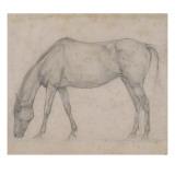 Etude de cheval Giclee Print by Edgar Degas