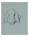Etude de tête de cochon Giclée-tryk af Thomas Couture