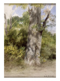 Le Gros chêne Reproduction procédé giclée par Rosa Bonheur
