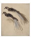 Deux études pour un oiseau de paradis Reproduction procédé giclée par  Rembrandt van Rijn