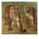 Tigre royal furieux Giclée-tryk af Rosa Bonheur