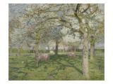 Le verger au printemps Giclée-tryk af Emile Claus