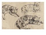 Trois études de chats allongés, la tête vers la droite Reproduction procédé giclée par Eugene Delacroix