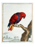 Collection of Rare Animals, Quadrupeds, Birds and Serpents, from Eastern and Western India Giclée-Druck von A. Vosmaer