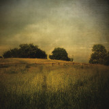 Another Place II Print by Crina Prida