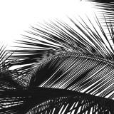 Palms 13 (detail) Poster by Jamie Kingham